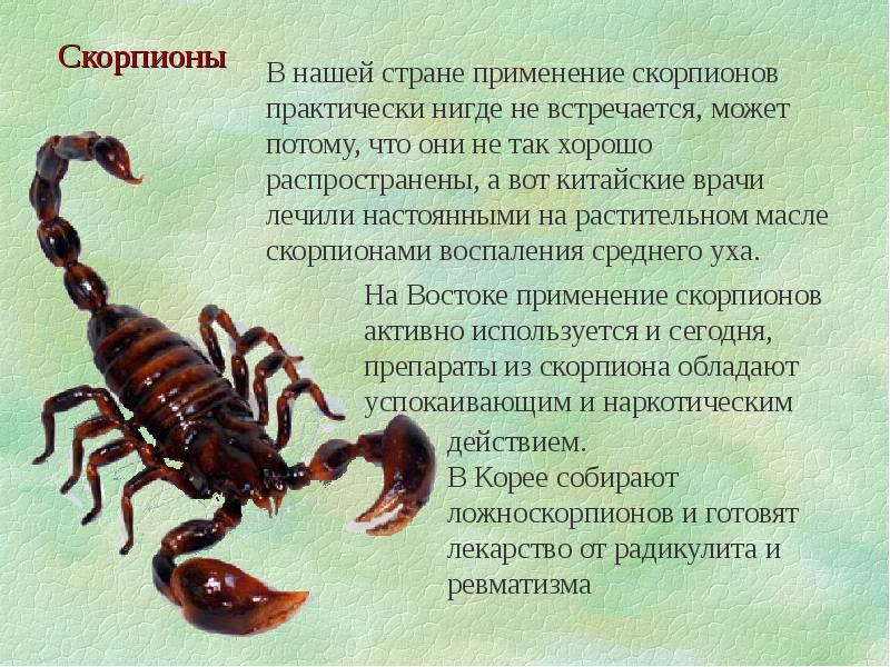 скорпионы знаком сильным почему считаются