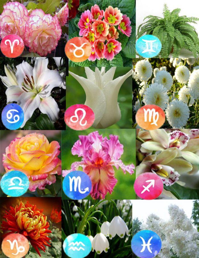комнатные растения по знакам зодиака с фото
